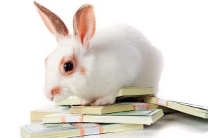доход от кроликов