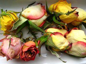 плюсы и минусы торговли цветами