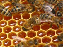 бизнес по пчеловодству