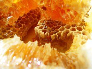 Пчеловодство как бизнес: план действий, инвентарь, выгода и рентабельность