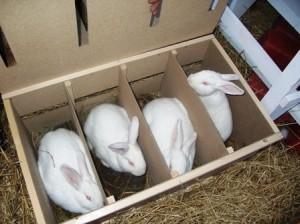 бизнес с кроликами