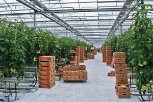 Бизнес в теплице: что выгодно выращивать?