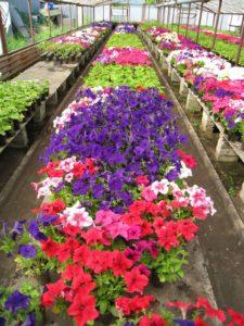 Цветоводство как один из видов бизнеса
