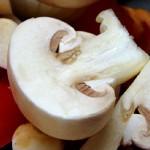 Выращивание грибов шампиньонов на продажу