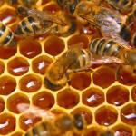 Создаем бизнес на пчелах