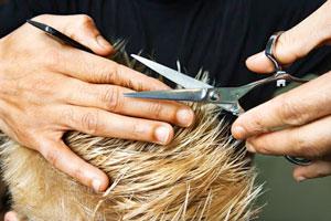 Открываем собственную парикмахерскую