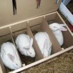 Открываем кроличью ферму