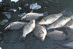 Рентабельность рыбного бизнеса