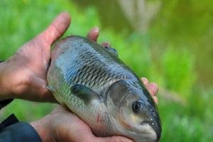 Разведение рыбы на продажу