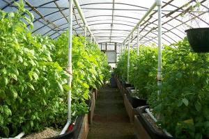 Зимняя теплица как бизнес: растениеводство в холодное время года
