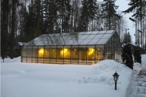 Выращивание овощей зимой как бизнес-идея
