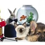 Как открыть магазин товаров для животных?