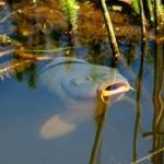 Как заняться разведением рыбы в пруду на продажу?