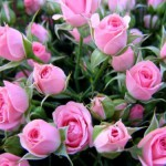 Как выращивать цветы в теплице на продажу?