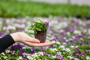 Выращивание цветов как малый бизнес