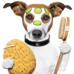 Магазин товаров для животных как малый бизнес