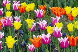 Как выращивать цветы в теплице с целью продажи