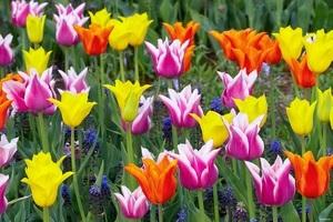 Выращивание цветов в теплице как бизнес-идея