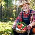 Сельский бизнес: обзор выгодных направлений